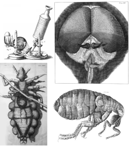 Micrographia illustrations no caption